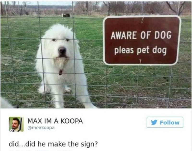 Dog - AWARE OF DOG pleas pet dog MAX IM A KOOPA Follow @meakoopa did...did he make the sign?