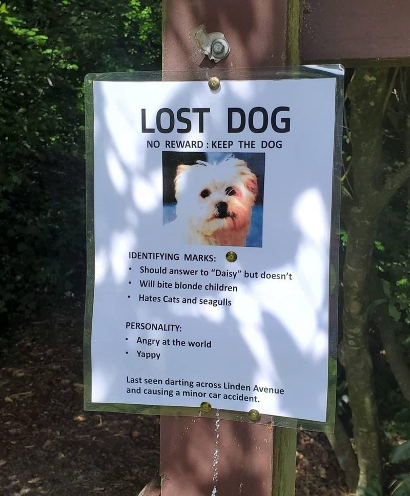 """White - LOST DOG NO REWARD : KEEP THE DOG IDENTIFYING MARKS: Should answer to """"Daisy"""" but doesn't Will bite blonde children • Hates Cats and seagulls PERSONALITY: Angry at the world Yappy Last seen darting across Linden Avenue and causing a minor car accident."""