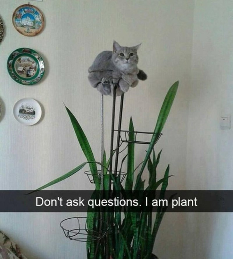 Plant - Don't ask questions. I am plant