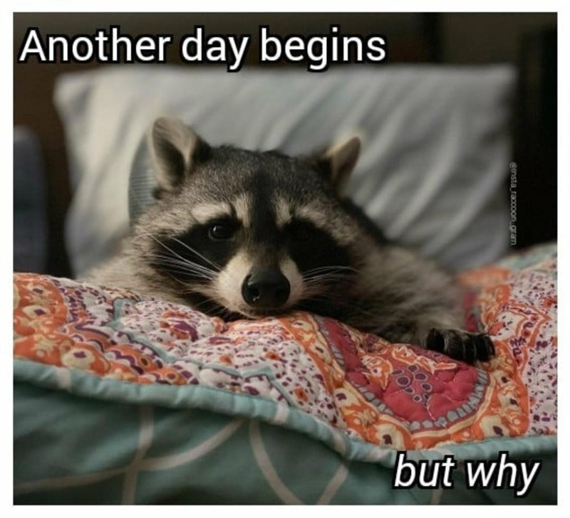 Organism - Another day begins but why insta raccoon.gram