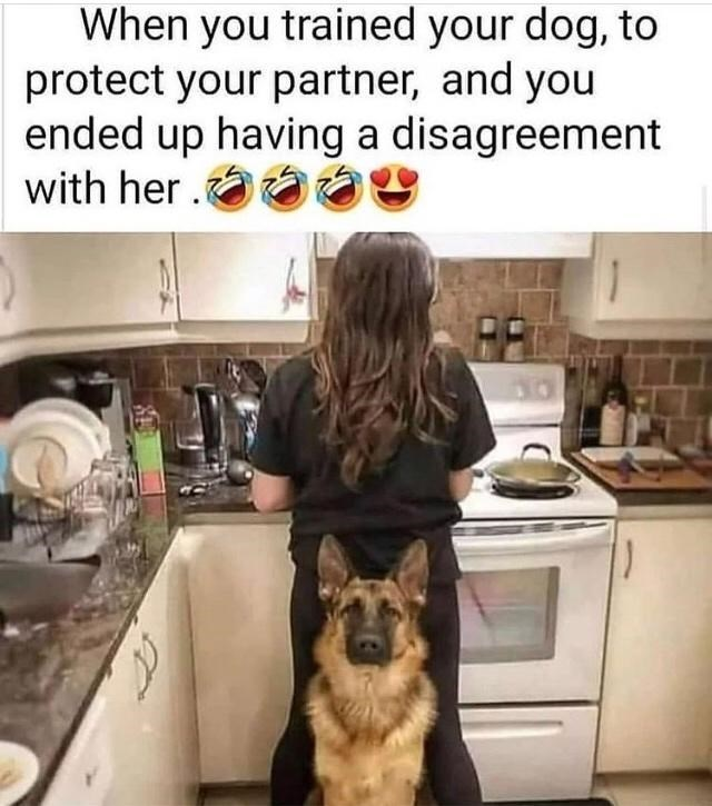 Dog - When you trained your dog, to protect your partner, and you ended up having a disagreement with her.