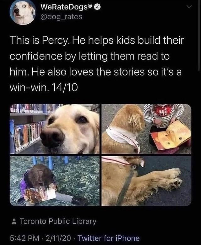 Dog - WeRateDogs® @dog_rates This is Percy. He helps kids build their confidence by letting them read to him. He also loves the stories so it's a win-win. 14/10 * Toronto Public Library 5:42 PM 2/11/20 · Twitter for iPhone