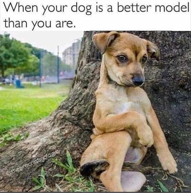 Dog - When your dog is a better model than you are. Catheprocrastinologist