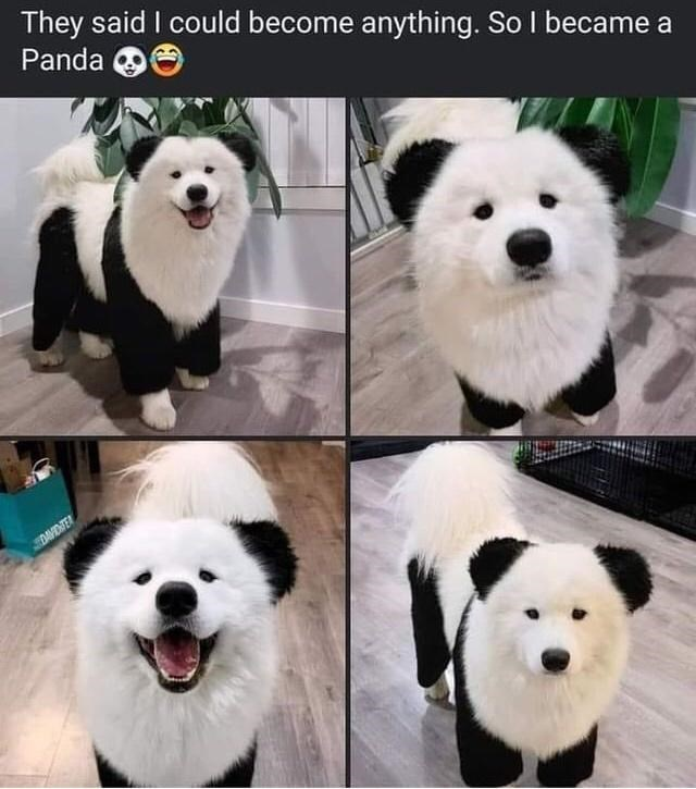 Nose - They said I could become anything. So I became a Panda