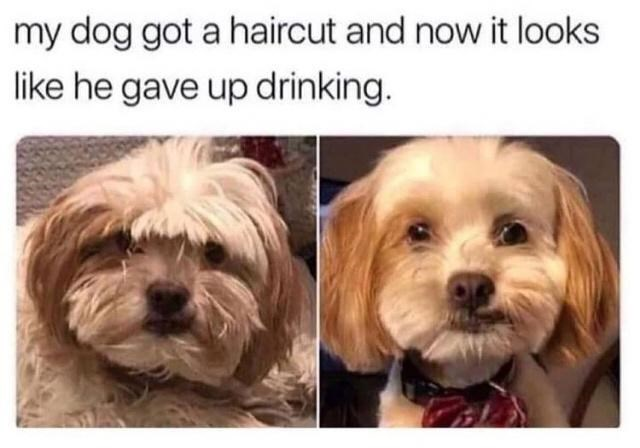 Dog - my dog got a haircut and now it looks like he gave up drinking.