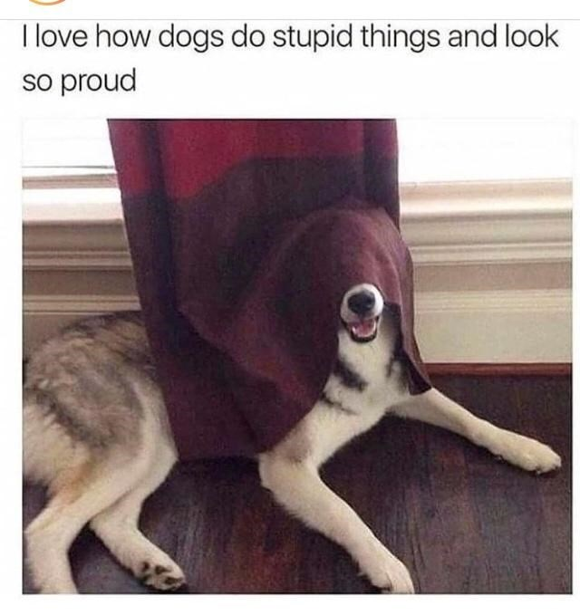 Dog - I love how dogs do stupid things and look so proud