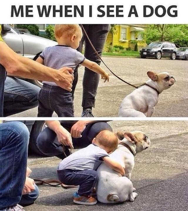 Clothing - ME WHEN I SEE A DOG