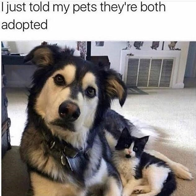 Dog - Tjust told my pets they're both adopted