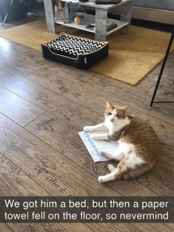 Cat - We got him a bed, but then a paper towel fell on the floor, so nevermind GONIA Olio d
