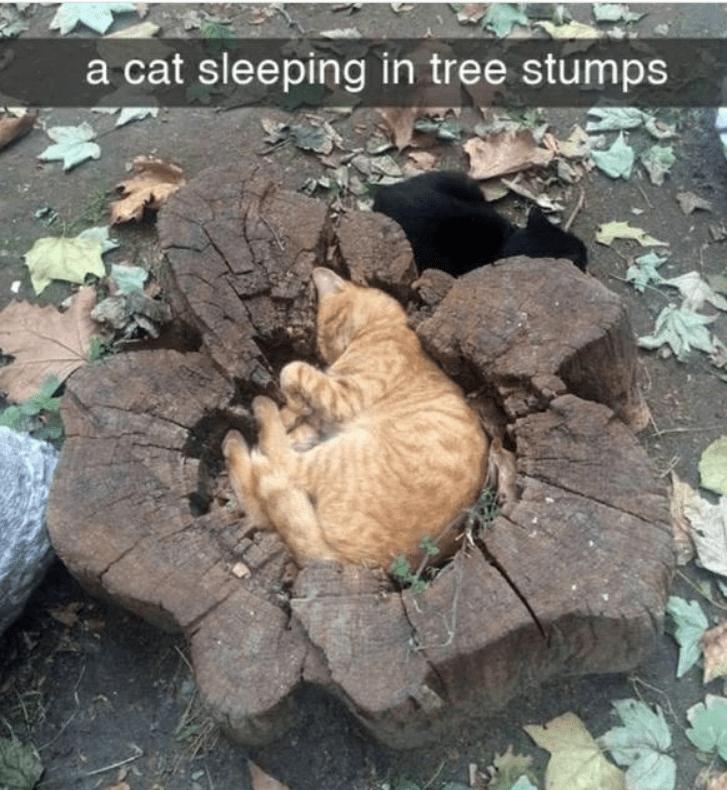 Cat - a cat sleeping in tree stumps