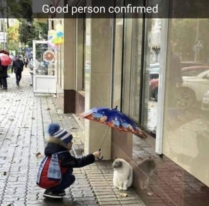 Cat - Good person confirmed