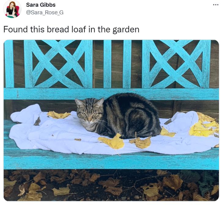 Cat - Sara Gibbs @Sara_Rose_G Found this bread loaf in the garden