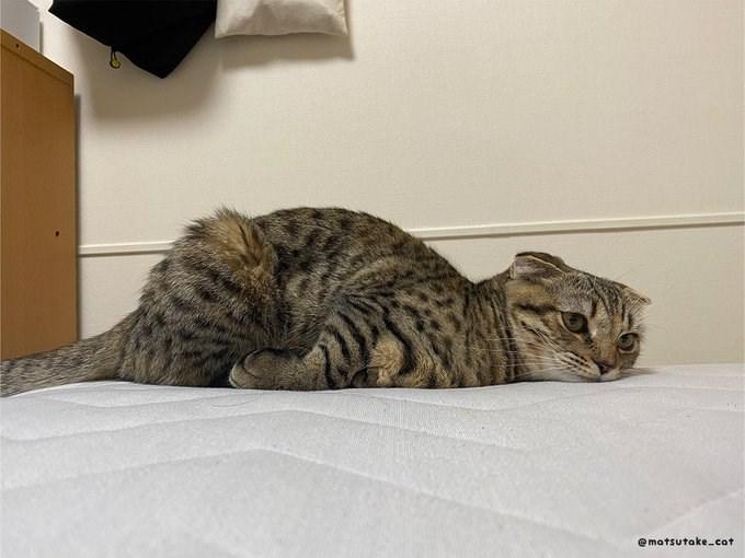 Cat - @matsutake-cat