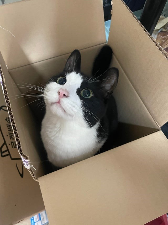 Shipping box - HHIE 근