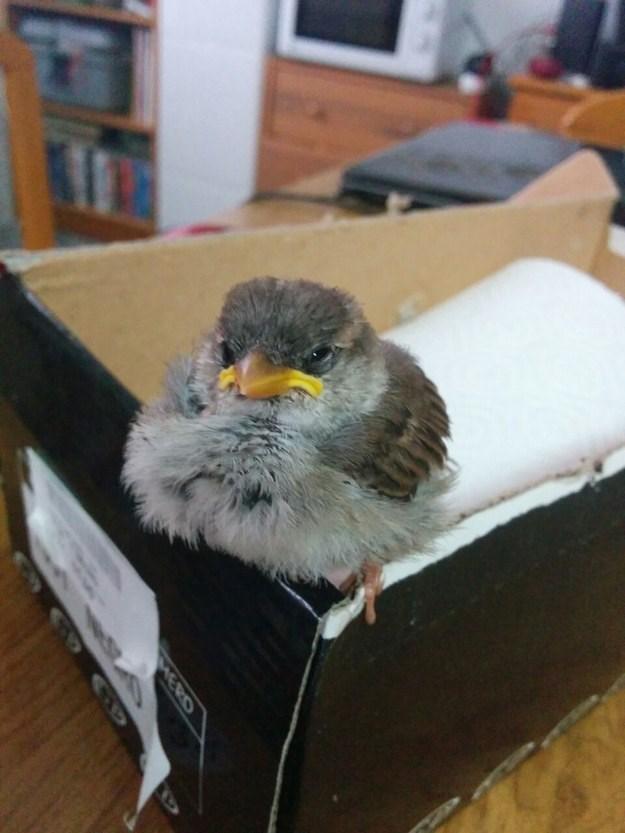 Bird - MERD CID