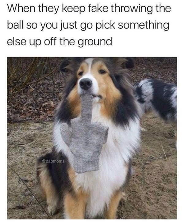 Dog - When they keep fake throwing the ball so you just go pick something else up off the ground @dabmoms