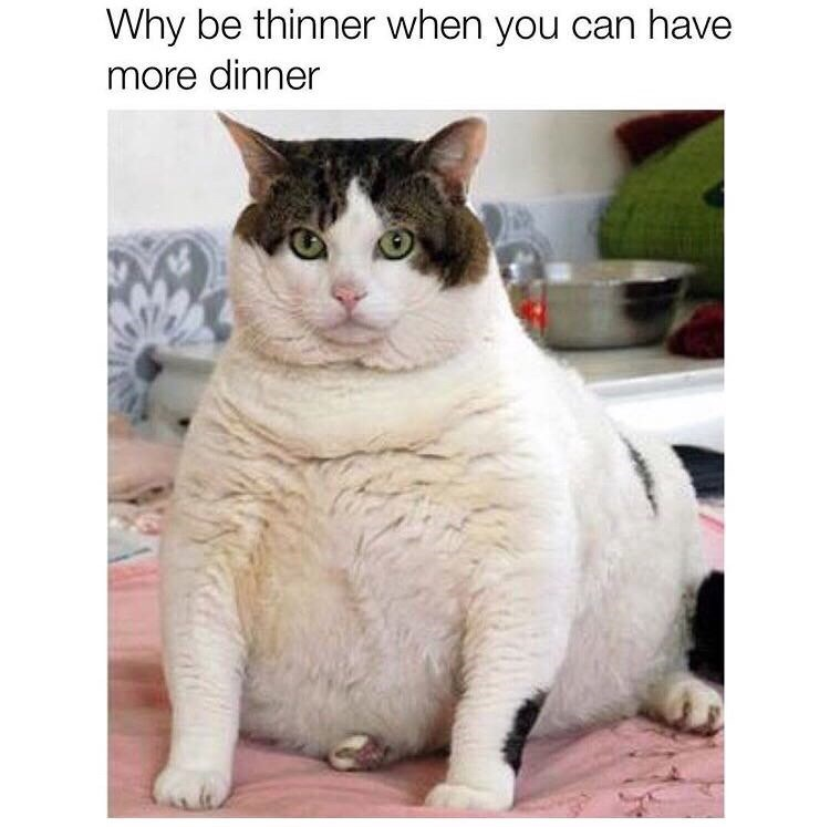 Cat - Why be thinner when you can have more dinner