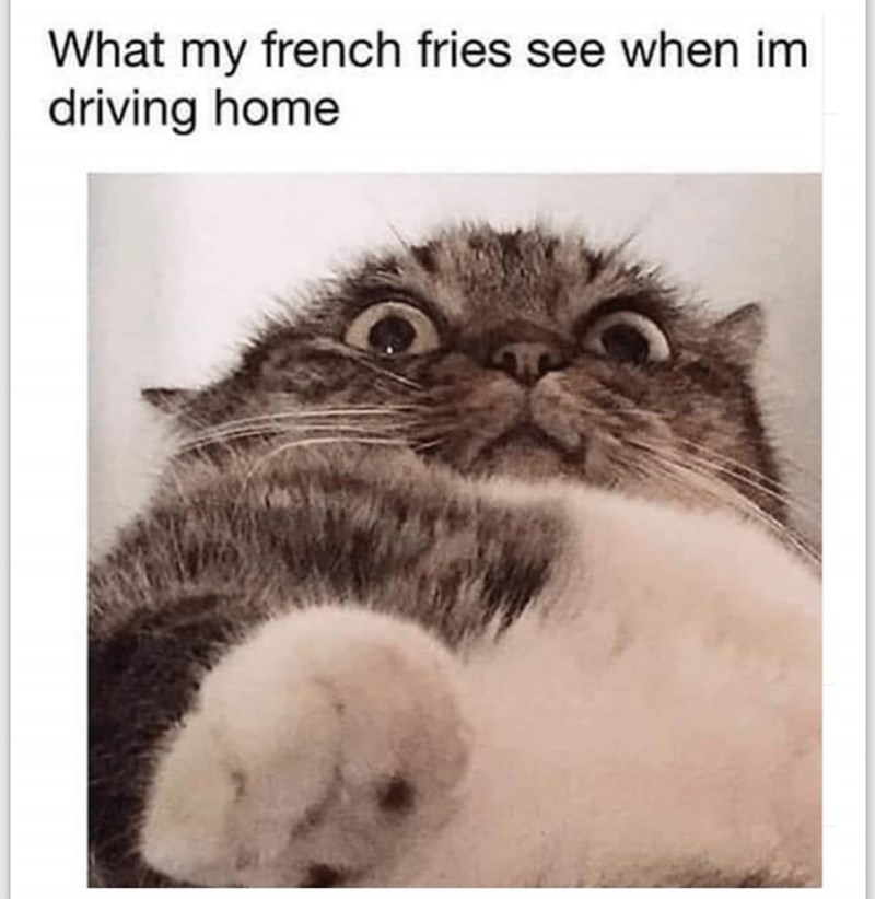 Cat - What my french fries see when im driving home