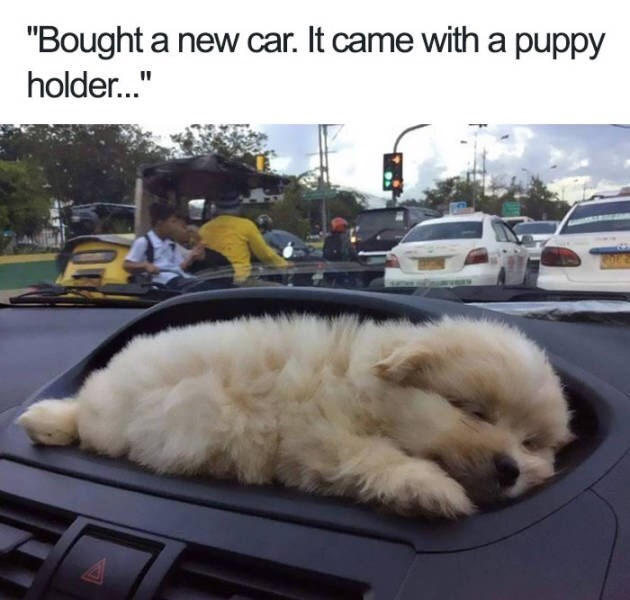 """Dog - """"Bought a new car. It came with a puppy holder..."""""""