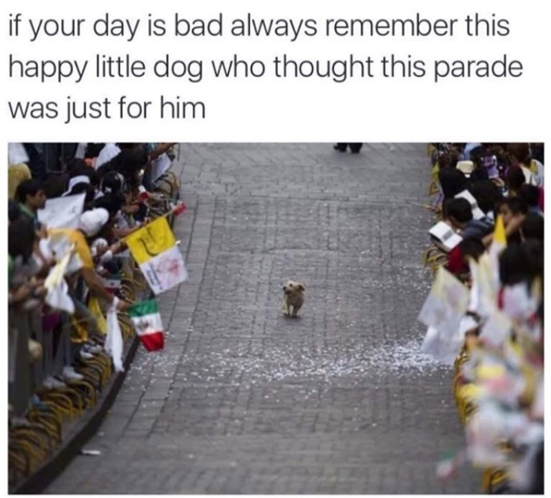Rectangle - if your day is bad always remember this happy little dog who thought this parade was just for him