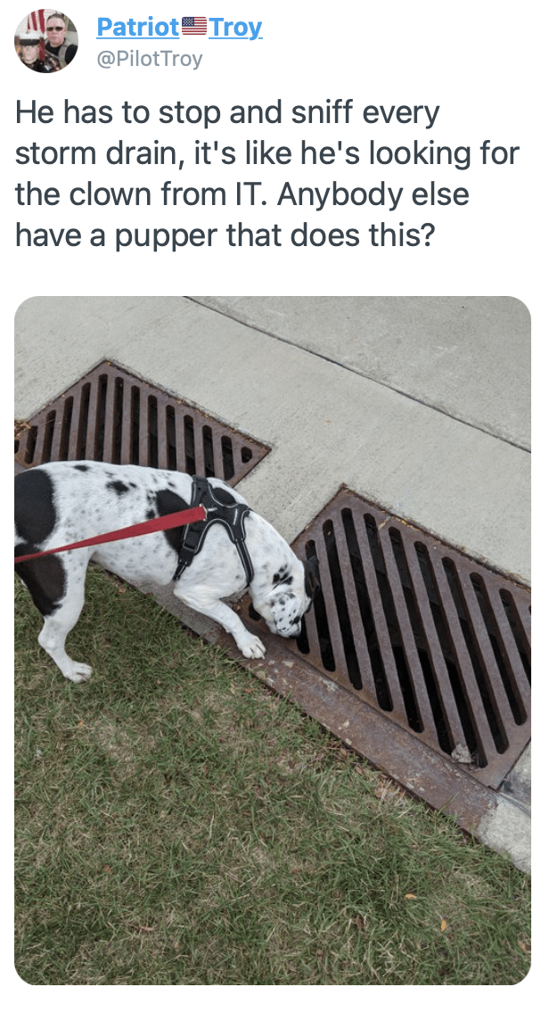 Dog - Patriot Troy @PilotTroy He has to stop and sniff every storm drain, it's like he's looking for the clown from IT. Anybody else have a pupper that does this?