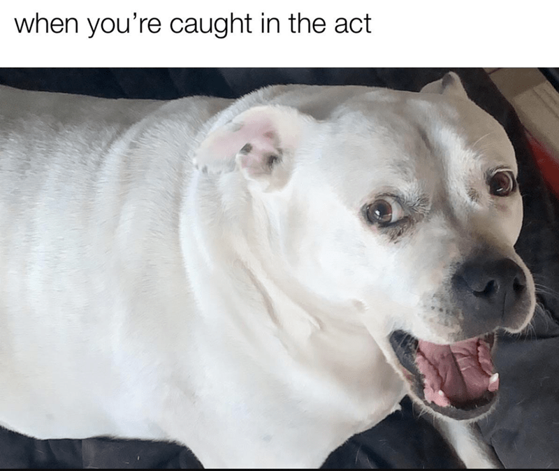 Dog - when you're caught in the act