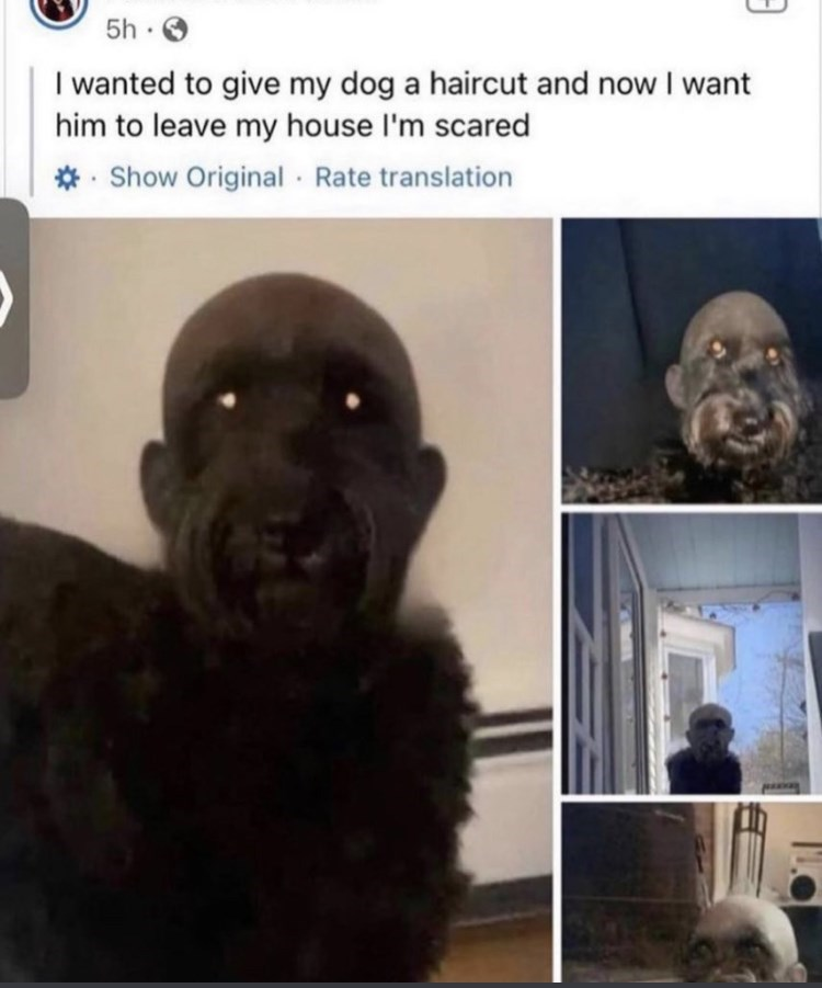 Nose - 5h O I wanted to give my dog a haircut and now I want him to leave my house l'm scared *- Show Original · Rate translation