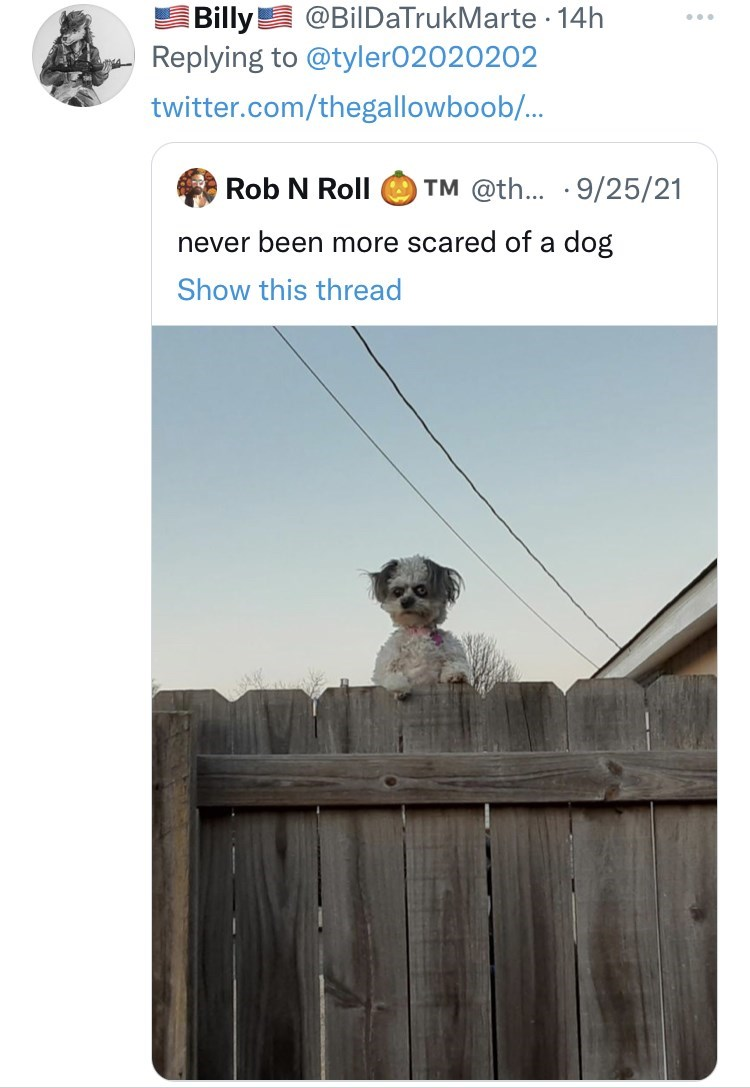 White - @BilDaTrukMarte · 14h Billy! Replying to @tyler02020202 twitter.com/thegallowboob/... Rob N Roll O TM @th... · 9/25/21 never been more scared of a dog Show this thread