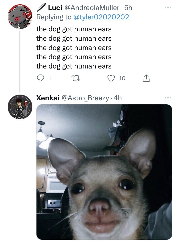 Carnivore - / Luci @AndreolaMuller · 5h Replying to @tyler02020202 ... the dog got human ears the dog got human ears the dog got human ears the dog got human ears the dog got human ears 1 10 Xenkai @Astro_Breezy · 4h