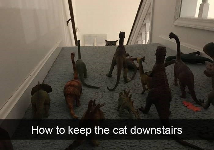 Dinosaur - How to keep the cat downstairs