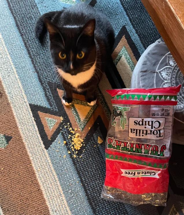 Cat - Gluten Free Tortilla Chips NET WT. 15 OZ: