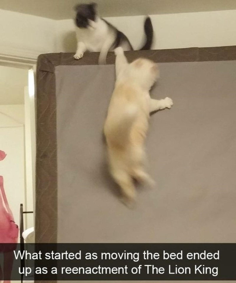 Cat - What started as moving the bed ended up as a reenactment of The Lion King