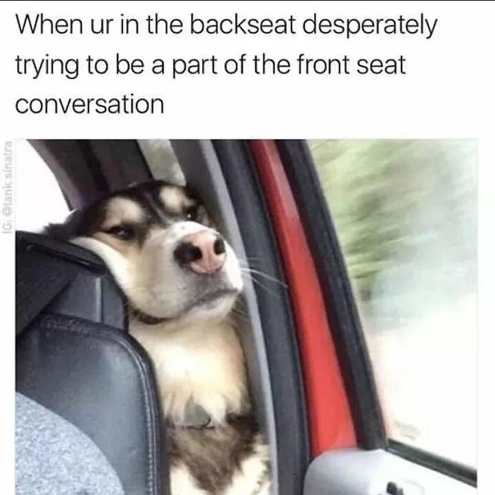 Dog - When ur in the backseat desperately trying to be a part of the front seat conversation IG: Otank sinatra