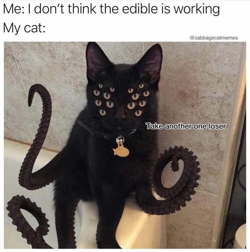 Cat - Me: I don't think the edible is working My cat: @cabbagecatmemes Take another one loser