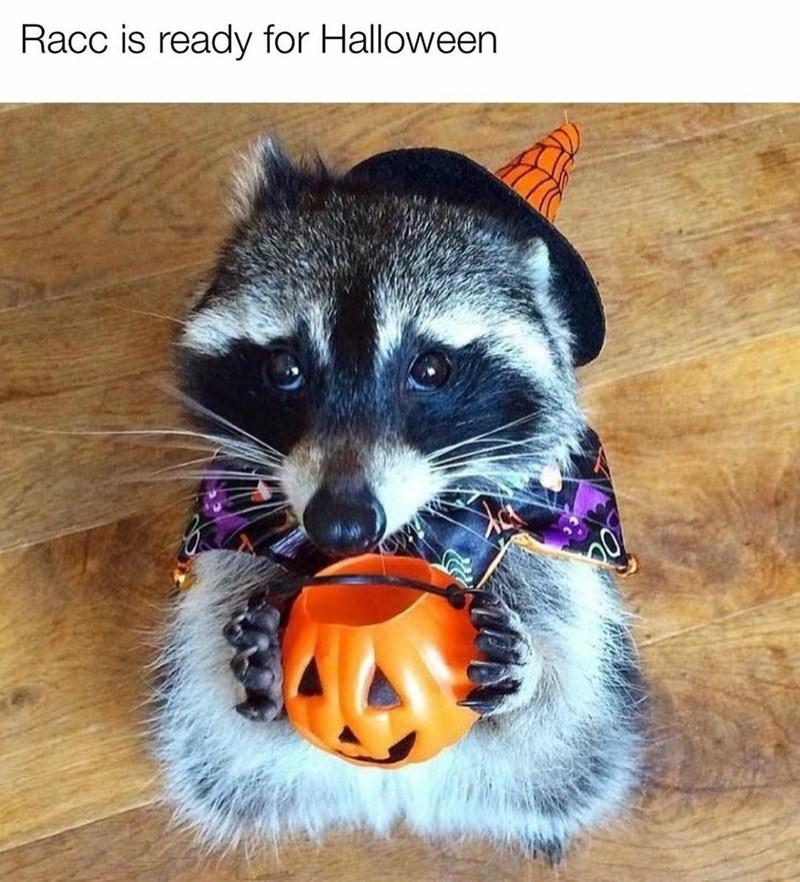 Dog - Racc is ready for Halloween