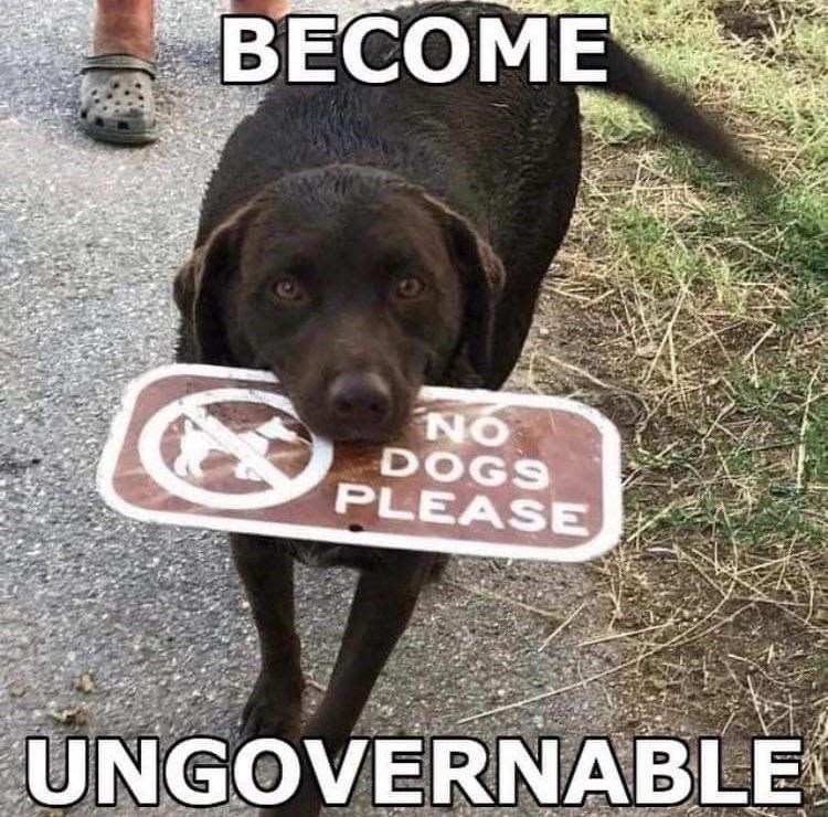 Dog - ВЕСОМЕ ON DOGS PLEASE UNGOVERNABLE