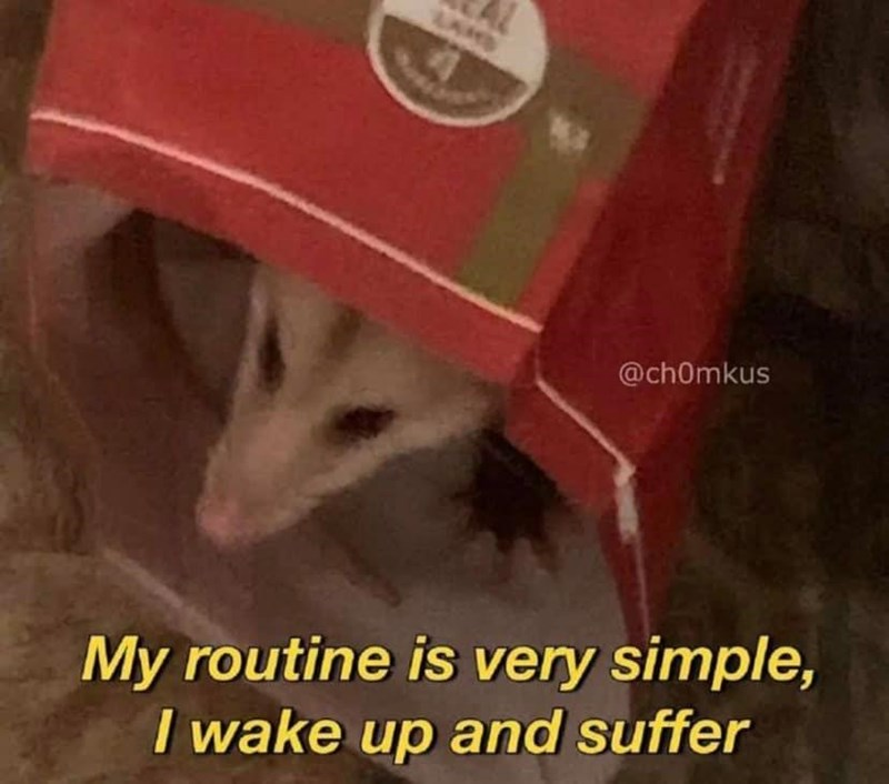 Cat - LAND @ch0mkus My routine is very simple, I wake up and suffer