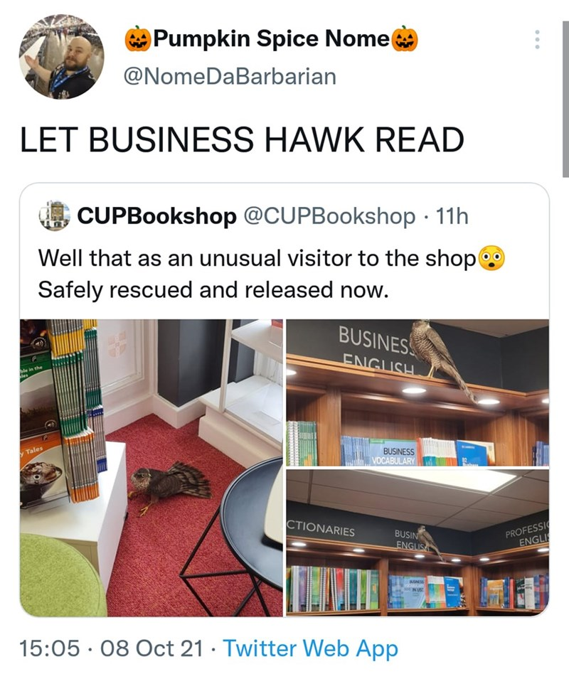 Furniture - Pumpkin Spice Nome @NomeDaBarbarian LET BUSINESS HAWK READ CUPBookshop @CUPBookshop · 11h Well that as an unusual visitor to the shop Safely rescued and released now. BUSINES ENGUSH BUSINESS VOCABULARY y Tales CTIONARIES BUSIN ENGLISA PROFESSI ENGLIS SNESS 15:05 · 08 Oct 21 · Twitter Web App