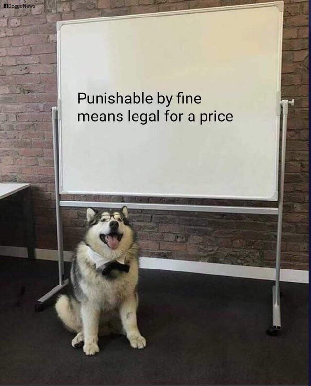 Dog - DoggoNews Punishable by fine means legal for a price