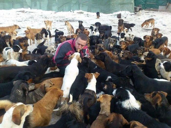 animal shelter dogs Serbian