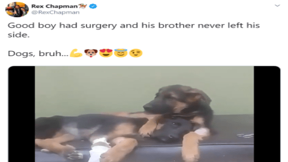 heartwarming dog tweet