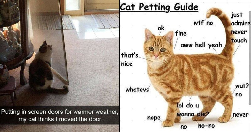 Funny and cute memes about cats