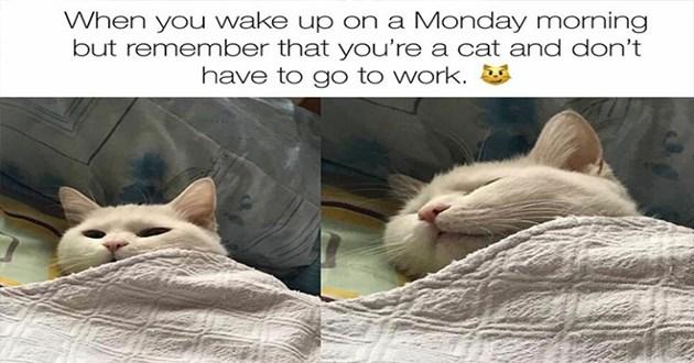 funny cute cat memes