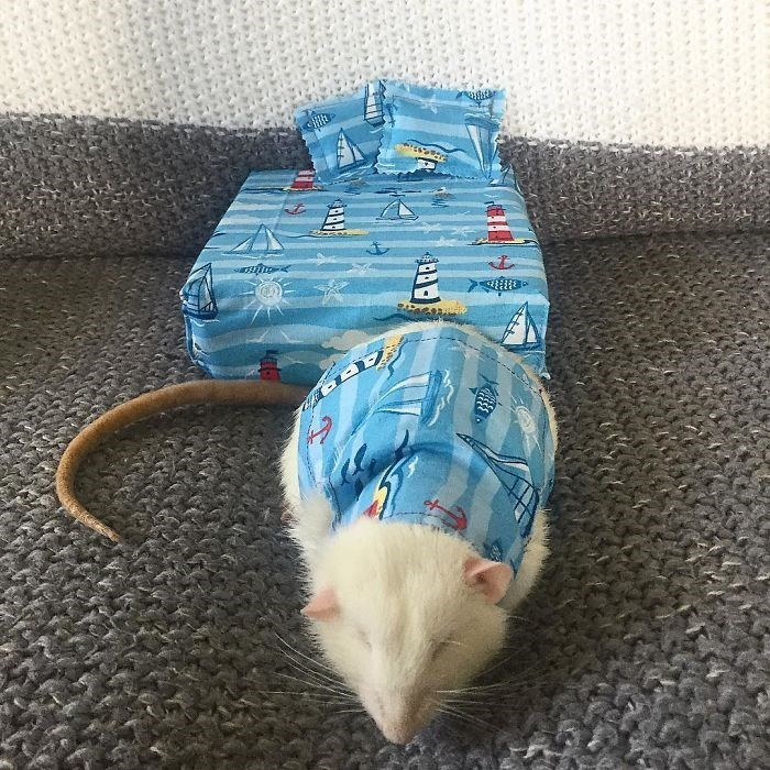 cute rats in tiny beds and pajamas
