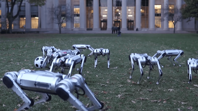 MIT mini cheetah robots are really cute