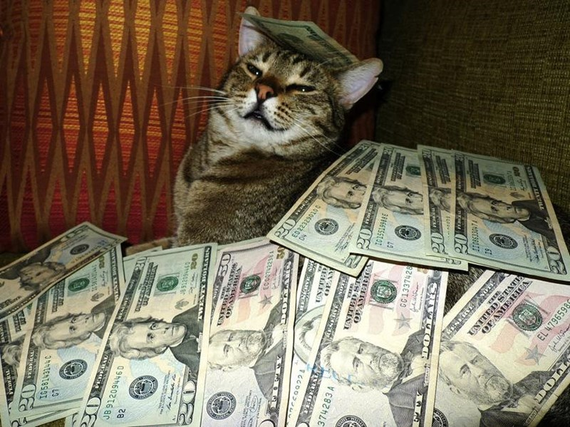 cats and piles of money