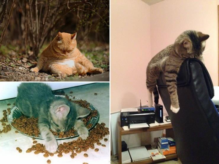 Hungover: The Animal Edition (21 Pics)