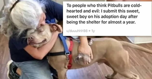 dogs pit bulls cute