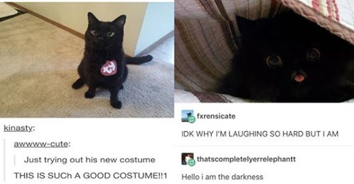 funny tumblr posts funny cats funny animals black cat adorable cute cute cats lol Cats funny tumblr - 9692165