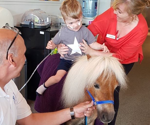 Therapy pony with a sick boy, Therapy ponies in Scotland
